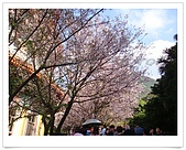 天元宮賞櫻:DSC02890.jpg