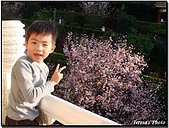天元宮賞櫻:DSC03061.jpg