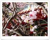 天元宮賞櫻:DSC02896.jpg