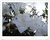 天元宮賞櫻:DSC02987.jpg
