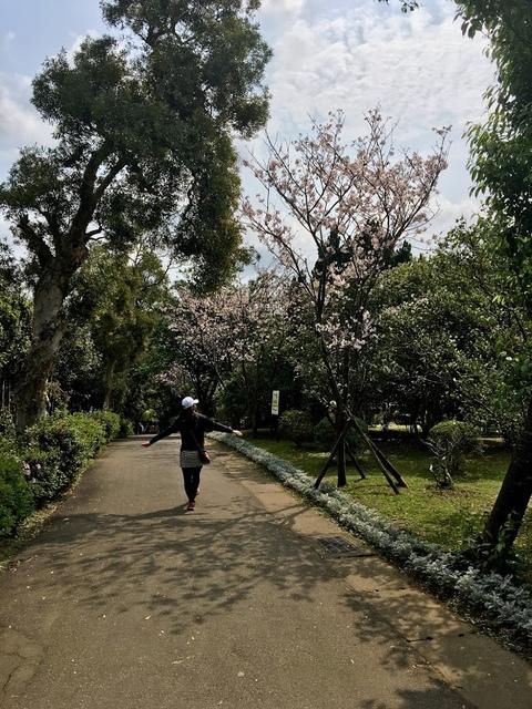 IMG_7891.JPG - 2018陽明山櫻花季