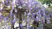 2018林口大湖公園紫藤花季:20180329_081126.jpg