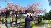 2018林口大湖公園紫藤花季:20180329_081913.jpg