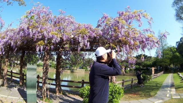 20180329_081913.jpg - 2018林口大湖公園紫藤花季