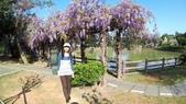 2018林口大湖公園紫藤花季:20180329_082111.jpg