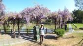 2018林口大湖公園紫藤花季:20180329_082034.jpg