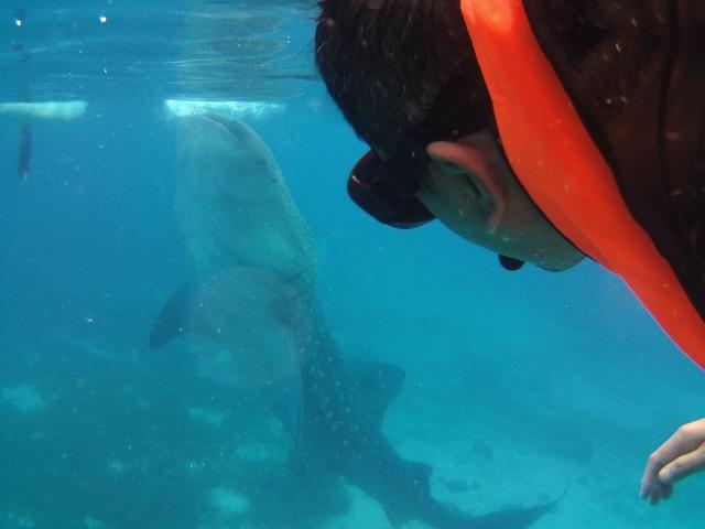 PICT0211.JPG - 宿霧與鯨鯊共游