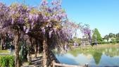 2018林口大湖公園紫藤花季:20180329_082240.jpg