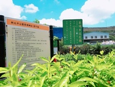 泰山黎明繡球花步道:2017-05-29-11-41-14.jpg