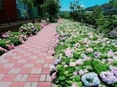 泰山黎明繡球花步道:2017-05-29-11-47-29.jpg