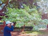 2018林口大湖公園紫藤花季:2018-03-29-08-07-17.jpg