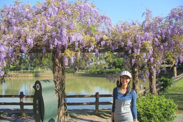 LRG_IMG_5774.JPG - 2018林口大湖公園紫藤花季