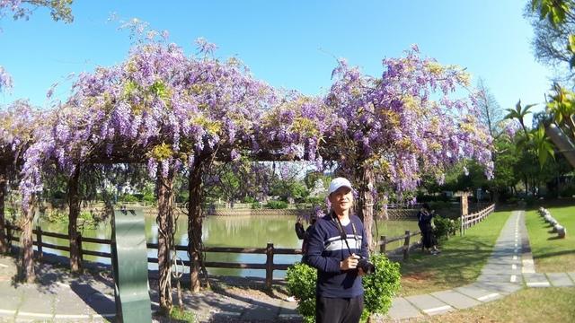 20180329_081906.jpg - 2018林口大湖公園紫藤花季
