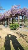 2018林口大湖公園紫藤花季:20180329_082139.jpg