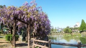 2018林口大湖公園紫藤花季:20180329_082228.jpg