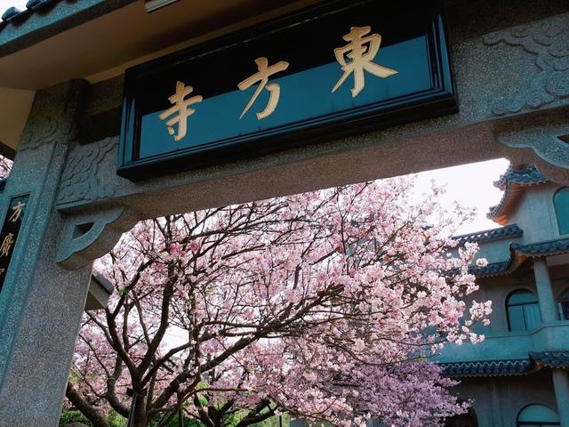 2018-03-25-08-57-43.jpg - 2018陽明山櫻花季