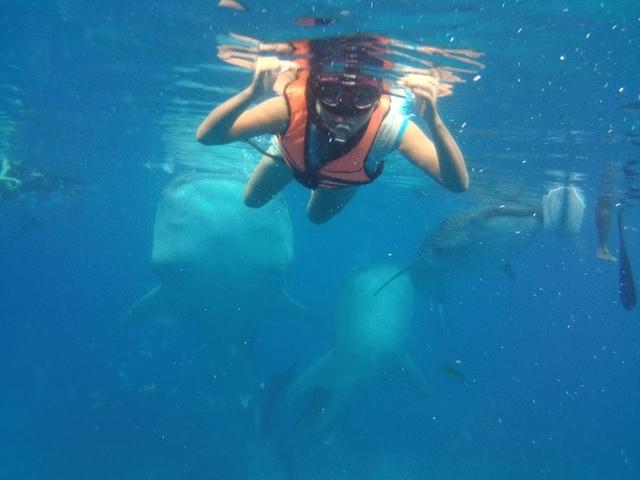 PICT0042.JPG - 宿霧與鯨鯊共游