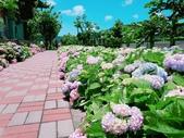 泰山黎明繡球花步道:2017-05-29-11-47-36.jpg