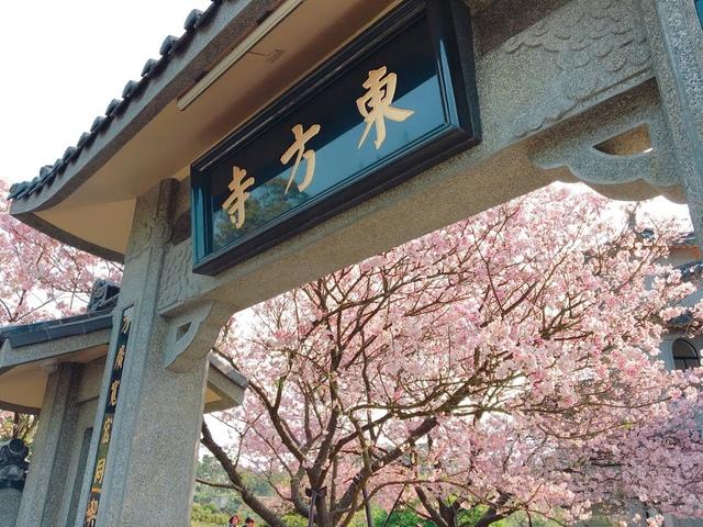 IMG_7816.JPG - 2018陽明山櫻花季