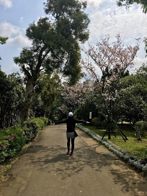IMG_7889.JPG - 2018陽明山櫻花季