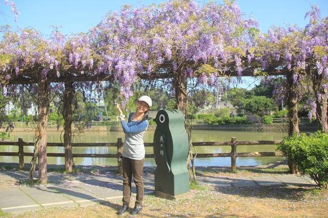 LRG_IMG_5776.JPG - 2018林口大湖公園紫藤花季