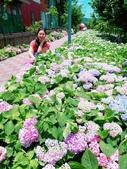 泰山黎明繡球花步道:2017-05-29-11-46-40.jpg