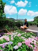 泰山黎明繡球花步道:2017-05-29-11-47-07.jpg