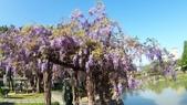 2018林口大湖公園紫藤花季:20180329_082212.jpg