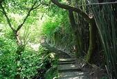 2011_04_24-坪頂古圳步道:P110424-154.jpg