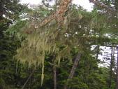 2003/06/20-22~雪山主東下翠池:雪山主東峰_620.JPG