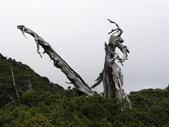 2003/06/20-22~雪山主東下翠池:雪山主東峰_653.JPG