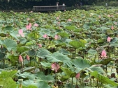 1090510 植物園賞荷趣:IMG_6799.JPG