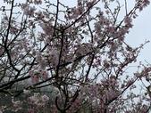 1100228 花季來陽明山:IMG_4471.JPG