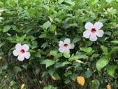 1090510 植物園賞荷趣:IMG_6796.JPG
