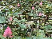 1090510 植物園賞荷趣:IMG_6810.JPG