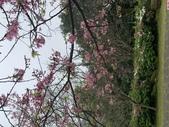 1100228 花季來陽明山:IMG_4574.JPG
