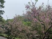 1100228 花季來陽明山:IMG_4624.JPG