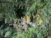 1090502 絹絲瀑布步道:IMG_6690.JPG