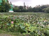 1090510 植物園賞荷趣:IMG_6793.JPG