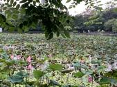 1090510 植物園賞荷趣:IMG_6795.JPG