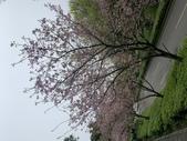 1100228 花季來陽明山:IMG_4627.JPG