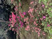 1100228 花季來陽明山:IMG_4621.JPG