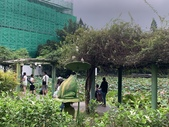 1090510 植物園賞荷趣:IMG_6813.JPG
