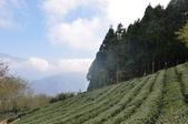 山上人家農場    觀音禪寺  關西柿餅:山上人家農場 觀音禪寺 關西柿餅