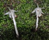 杉林溪  牡丹花  水晶蘭  筆頭蛇菰  :杉林溪  牡丹花  水晶蘭  筆頭蛇菰