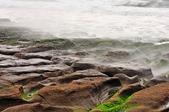 天元宮櫻花  老梅綠石槽  :   老梅綠石槽