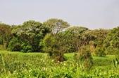 鹿角溪人工濕地  :鹿角溪人工濕地
