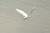 汐止 江北大橋附近  白鷺鷥 鸕鷀 大白鷺   蒼鷺 夜鷺  1:汐止 江北大橋附近  白鷺鷥 鸕鷀 大白鷺   蒼鷺 夜鷺
