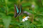 三富農場  四結福德廟:三富農場  蝴蝶與小花