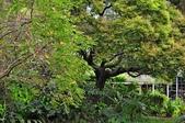 台灣紫嘯鶇  小彎嘴畫眉   斑點鶇   戴勝  金翅雀   :台北植物園